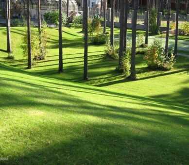 Озеленение лесного участка