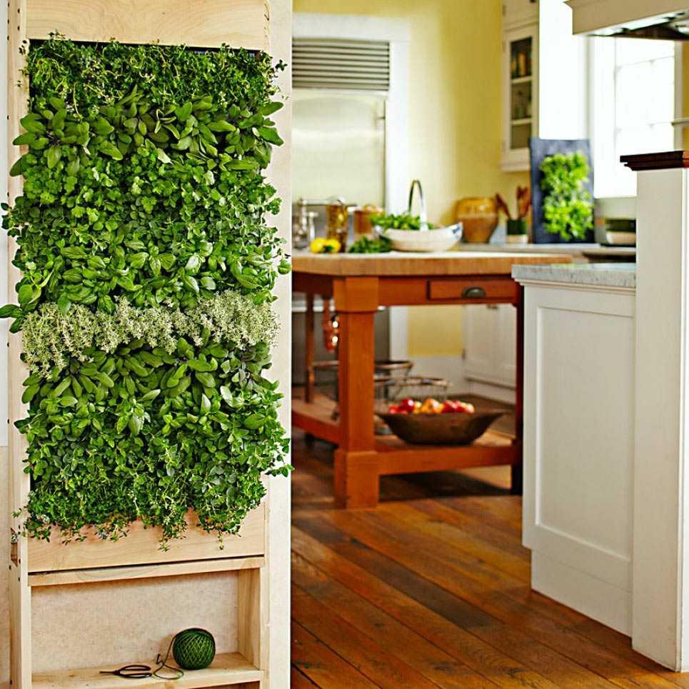 Озеленение жилых помещений