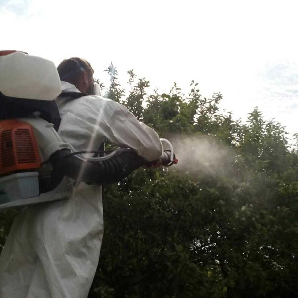 Опрыскивание деревьев от вредителей и болезней